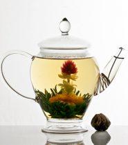 trà nở hoa